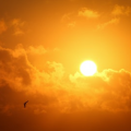 Dealing with the summer heat without heavy air conditioning: sun screening windows